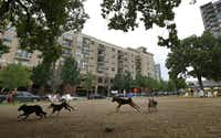 Dogs run around at Mutts Canine Cantina, a business that's become a neighborhood green space in Uptown. But Mutts won't be around for the long term. It has a temporary lease; the land is zoned for high-rises. As the construction boom continues, city officials and urban planners say Dallas must strike a better balance between buildings and open space.Nathan Hunsinger  - Staff Photographer