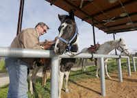 """Barnes Davis saddles up Jedi and Pepper at the horse park. Mayor Mike Rawlings hailed the park: """"We've been wanting this for so long, and this is a wonderful place to connect.""""( Michael Ainsworth  -  Staff Photographer )"""