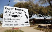 A sign at the intersection of Josey Lane and Chamberlain address the egret-nesting problem on the street in 2013.Louis DeLuca