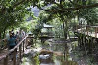 Guests wander a boardwalk pathway through the Rainforest Habitat, a walk-through aviary at Wildlife Habitat Port Douglas.