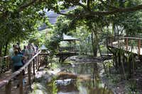 Guests wander a boardwalk pathway through the Rainforest Habitat, a walk-through aviary at Wildlife Habitat Port Douglas.