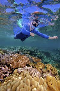 On the Great Barrier Reef, a snorkeler floats above a coral seabed that looks like the work of an artist gone mad.