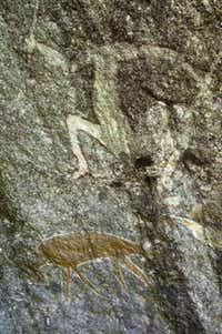 Aboriginal art decorates a hidden rock face found on a short Kuku Yalanji Dreamtime Tours walk. Aboriginal natives may have been living this rainforest area for up to 50,000 years.