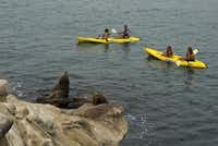 Kayaking at the San Diego-La Jolla Underwater Park provides wildlife encounters with harbor seals and other marine animals.