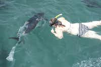 South Australia's Port Lincoln provides the worldÕs only opportunity to swim with turbo-charged tuna, whose acceleration through water is greater than a Porsche 911 on land.