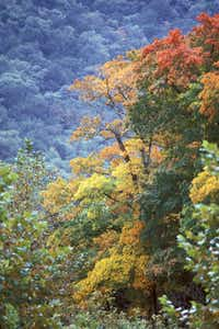 Lost Maples State Park in Vanderpool, Texas, is celebrated for its fall colors.(Texas Parks & Wildlife)