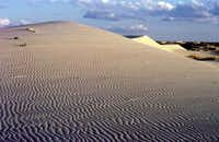 Monahans Sandhills State Park's enormous gypsum dunes are constantly on the move in the West Texas wind.