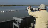 The Leonabelle Turnbull Birding Center is one of a half-dozen places to study the feathered wildlife calling this part of the Texas coast home.