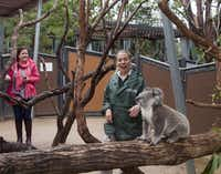 International visitors to the Taronga Zoo interested in learning about Australian wildlife would find the behind-the-scenes Wild Australia Experience particularly rewarding. The maximum group size is eight and it's led by a zoo-keeper.