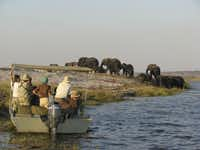 Getting up close and personal to elephants on a shore excursion from the MS Zambezi Queen. The beautiful Zambezi Queen was specifically designed for safari river cruising on the Chobe River and offers a sophisticated design to maximize animal sightings.