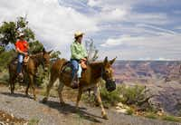 Mules are perfect for rides along the Grand Canyon because of their strong sense of self-preservation, says guide Mattie-Le Booth.