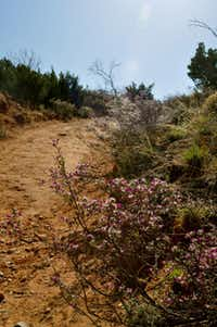 In the spring, the over 90 miles of trails at Caprock Canyons State Park, 100 miles southeast of Amarillo, are lined with blooms.
