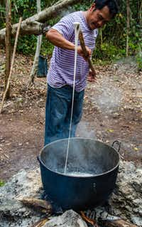 The collected sap is boiled, stirred and kneaded in large pots until the sap thickens and becomes elastic. Natural chewing gum is made from the sap of the chico zapote, trees, which grow near Tulum in MexicoÕs Yucatan.