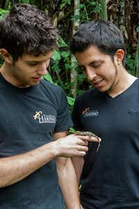 Biologist Alejandro Arteaga admires a Pinocchio lizard, a species which he and his colleagues re-discovered in 2013 in the Mindo Valley in Ecuador.( Eric Mohl  -  Horizon Writers Group )