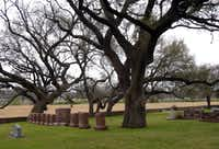 The Johnson Family cemetery is located under live oak trees near the Pedernales River in Stonewall.  LBJ's tombstone has the presidential seal and Lady Bird's bears the Texas bluebell.