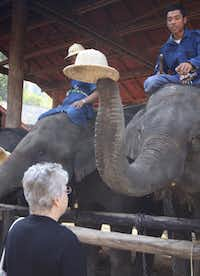 An elephant takes the hat off the head of his mahout (trainer) and places it on Mona Kaufman's head at the Maesa Elephant Camp in Chang Mai, Thailand on Jan. 21, 2013.