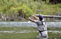 Travel writer Eric Vohr practices his fly-fishing technique. The Atnarko is rich with king, pink, sockeye, chum and coho salmon, as well as a number of varieties of wild trout.(Michaela Urban - Special Contributor)