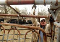 """Norman Gidney, 82, works the cattle chute as he prepares to sort cattle on a friend's ranch near Melissa. """"We're farming land that used to be 43 family farms, families that I remember,"""" he says. """"In farming now, you either have to get pretty large or you're out."""""""