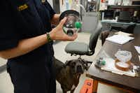 Lt. Patti Krafft holds a pet oxygen mask while standing beside Hula, a live find disaster dog, at Fire Station No. 48 in Lake Highlands. The Highland Meadows Neighborhood Association Petwatch group donated animal oxygen masks to the fire station, and now the group has launched an initiative to equip all 57 Dallas fire stations with at least one set of pet oxygen masks.Rose Baca - neighborsgo staff photographer