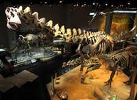 The main dinosaur exhibit in the Life Then and Now Hall at the Perot Museum of Nature and Science depicts the Alamosaurus (the really tall one), a native Texan.( File 2012  -  Staff Photo )
