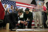 Gov. Rick Perry, left, and Adan Gallegos, right, help service dog Boots place his paw print during a ceremonially signing of House Bill 489, at VFW Post 76, Friday, June 7, 2013, in San Antonio.  The bill will allow people with disabilities to use the assistance of service animals in all public places, including retail businesses and restaurants. (AP Photo/Eric Gay)(Eric Gay - AP)