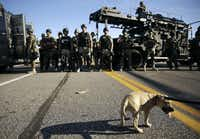 A small dog is held on a leash by a protester as police in riot gear watch protesters in Ferguson, Mo. on Wednesday, Aug. 13, 2014. On Saturday, Aug. 9, 2014, a white police officer fatally shot Michael Brown, an unarmed black teenager, in the St. Louis suburb. (AP Photo/Jeff Roberson)Jeff Roberson - AP