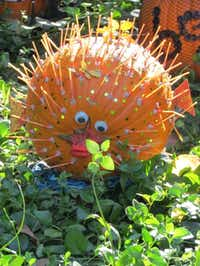 Come see painted pumpkins, such as this puffer fish, at the Fort Worth Zoo's Halloween celebration Oct. 25-27.