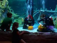 Come learn scary fish facts, watch underwater pumpkin carving and have more frightful fun at Sea Life Aquarium Grapevine.