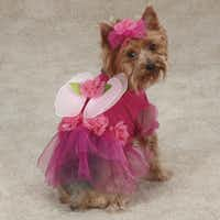 A pretty pink pullover from PetEdge transforms a pup into a flower fairy with a matching headpiece. Multiple sizes, $21.99 to $29.99.