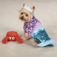 The little mermaid from PetEdge comes in sizes from extra-small to extra-large. $21.99 to $29.99.