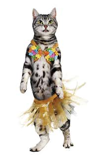 Petco's hula girl is secured with Velcro straps. One size fits most. Suggested retail $9.99.