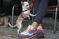 In this picture taken Sept. 5, 2013 a dog accompanies its owner at an outdoor table of a cafe in the capital city's trendy Savior Square in Warsaw, Poland.
