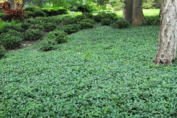 week 5 with neil sperry  look for dependable ground cover