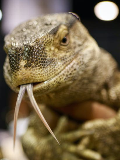 Photos: Families snake their way through the North American Reptile