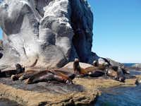 This January 2014 photo shows sea lions resting on Coronado Island in the Loreto Bay National Marine Park in Loreto, Mexico. The seaside village is located on the Baja Peninsula.( Karen Schwartz  -  AP )