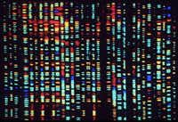 This undated computer rendering of a fragment of the human genome is part of a new exhibit at the American Museum of Natural History.( AP )