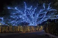 The icicle tree is a crowd favorite at the Celebration in the Oaks at New Orleans' City Park.( New Orleans Convention & Visitors Bureau )
