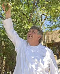 La Posada   chef Todd Hall admires a tree planted 130 years ago by Julia Staab and Archbishop Jean-Baptiste Lamy.(Paul Ross - Special Contributor)
