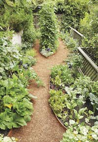 Narrow spaces around patios and in side yards can support vegetables with about 6 hours of direct sun. Herbs and leaf lettuces are interplanted on the right. A squash vine climbs a trellis on the left.