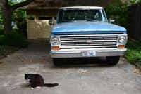 A neighborhood cat, who often shows up in Gayla Russell's backyard, sits in the driveway. Russell's backyard was recently named a Certified Wildlife Habitat by the National Wildlife Federation. It has native plants, natural sources of food, clean water and places to raise young for local wildlife.