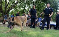Richardson Police officers Lee Rhinebarger (left) and Cory Wendling show students how Max, a Belgian Malinois, is able to track items during Youth Citizen Police Academy.( Rose Baca  -  neighborsgo staff photographer )