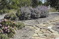 Tyhe Upper Trinity demonstration garden is maintained to show people that a water-wise landscape can be beautiful: risidents are encouraged to visit and ask questions about what works best for them.