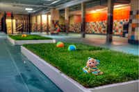 Pooch Hotel features indoor live grass for dogs to use the restroom.(Courtesy of Pooch Hotel)