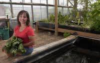 Waxahachie resident Dina Rolan has an aquaponics system in her backyard greenhouse. The system, built by her husband, Scott Rolan, has fish in a large tank. Water from the fish is pumped into garden beds. The solid waste is first filtered out, the plants use the remaining nutrients and the cleaned water goes back to the fish.