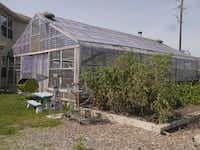 Dina Rolan has a aquaponics system in her backyard greenhouse in Waxahachie.