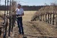 Howard Davies trims cabernet sauvignon vines at his vineyard.