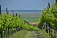 Rows of grapevines in a vineyard lead to Austria's Lake Neusiedl, a World Heritage site that's at the heart of another prime winemaking region.( Photos by Michaela Urban  -  Special Contributor )