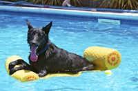 """""""Dog Day of Summer"""" by John Babis.(John Babis)"""