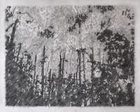 Adam Ball Beyond 2014 Charcoal on hand- cut paper 128 x 159 cm(Goss-Michael Foundation - Michael Foundation )