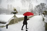 A woman walks in strong winds and heavy snow fall in Central Park on January 23, 2016 in New York City. (Photo by Astrid Riecken/Getty Images)